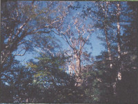 Scan100043